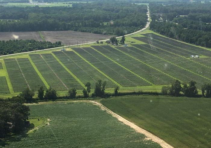 A solar farm in North Carolina using the same type of solar panels Summit Farms will use.Image: Joe Higgins