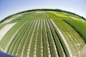 At Michigan State University's W. K. Kellogg Biological Station, Great Lakes Bioenergy Research Center researchers are evaluating the performance of a variety of novel bioenergy crop production systems for crop yield and quality, impacts o...